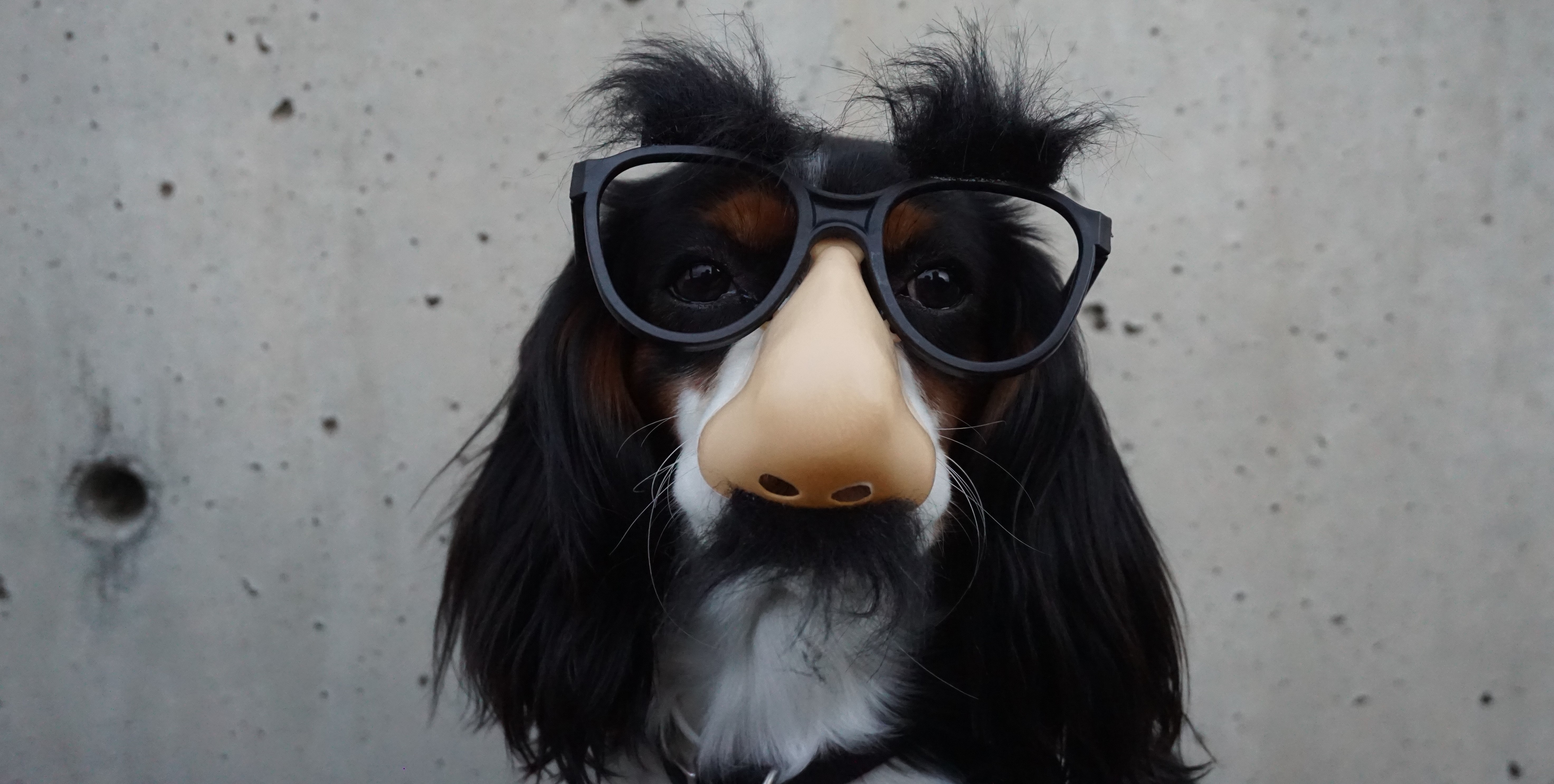 dog-glasses-e1501175155936